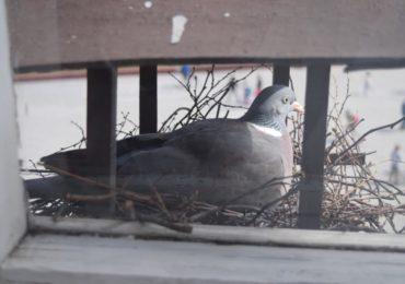 Ochrona ptaków i nietoperzy podczas termomodernizacji budynków